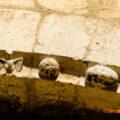 Caps zoomòrfics, figures senceres d'animals i simples esferes decoren l'aresta rebaixada de la portalada romànica de cinc arquivoltes, de finals del segle XII, de l'església de Sant Just i Sant Pastor de Falç. Tolba, Ribagorça d'Osca. Aragó, Montsec de l'Estall.